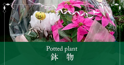 Potted plant鉢物